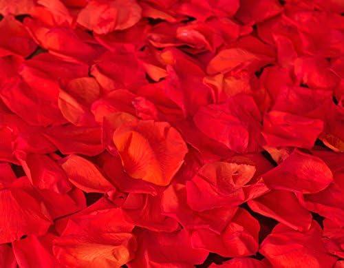 LOVERSpack Romantic Pack Angus - con Este Pack romántico podrás ...