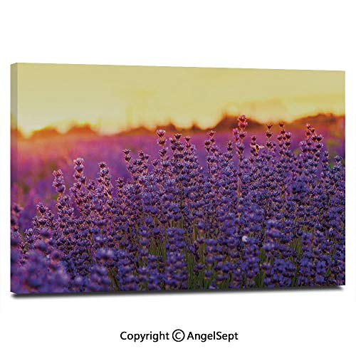 Canvas Prints Modern Art Framed Wall Mural Lavender Field in Summer Near Tihany Hungary Agriculture Harvest Scent Aroma Decorative Wall Decorations for Living Room Bedroom Dining Room Bathroom Offic