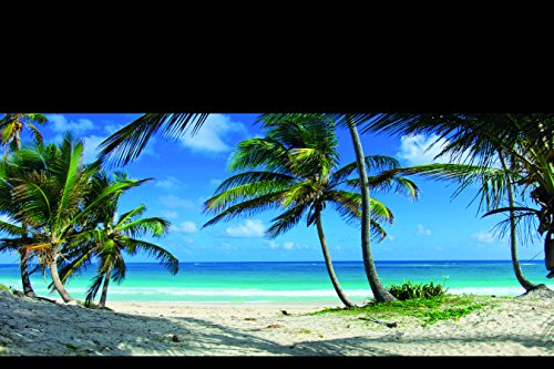 Reptile Habitat Background, Tropical Beach and Palm Trees, 24