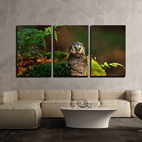 wall26 - 3 Piece Canvas Wall Art - Boreal Owl Standing on the Moss