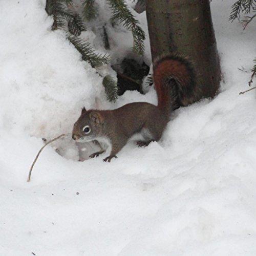 - A Squirrel Feeding