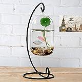 Glass Home Gardens Best Deals - Hanging Glass Flower Vase Bottle Hydroponic Terrarium Container Home Decor - L