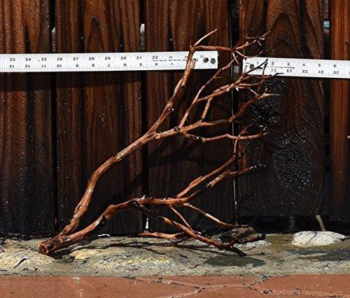 Manzanita Driftwood 16