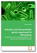 Salicylic acid biosynthetic genes expressed in Rhizobium: Rhizobium strains harboring salicylic acid gene via horizontal gene transfer