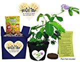 Mazel Tov! Bat or Bar Mitzvah Gift - TickleMe Plant Gift Set - Grow The Plant That