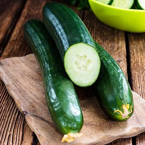 (David's Garden Seeds Cucumber Slicing Tendergreen Burpless 8213 (Green) 50 Non-GMO, Heirloom Seeds)