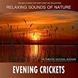 Evening Crickets: Relaxing Sounds of Nature