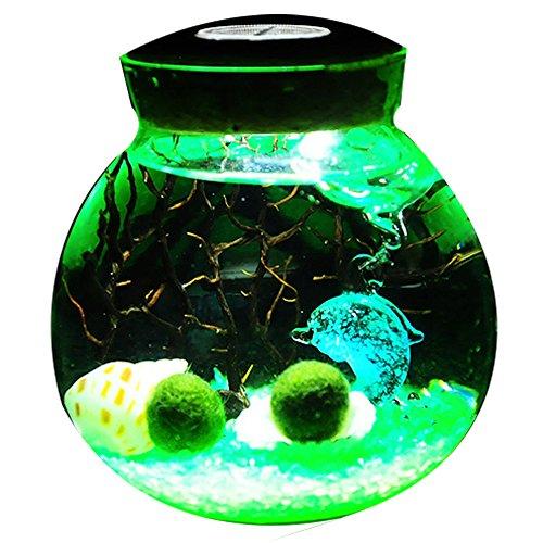 (OMEM Aquarium Kits-Living Moss Ball,Valentine Gift Sea Fan, Gravel, Cone Seashell, Work Desk Decoration (Green))