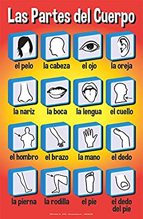 Amazon.com: Set of Basic Spanish Posters #2 (Set of 6): Industrial & Scientific