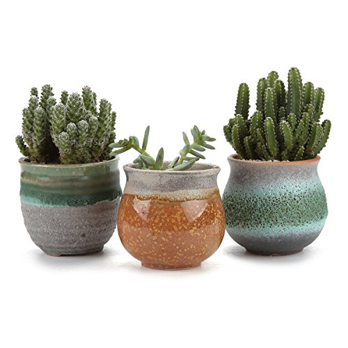 T4U 2.75 Inch Ceramic Summer Trio Succulent Plant Pot/Cactus Plant Pot Flower Pot/Container/Planter Green Package 1 Pack of 3 by T4U