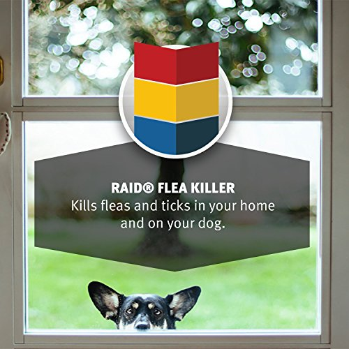 raid flea killer for home and dogs 16 ounce 6 pack animals pet supplies pet supplies pet tick. Black Bedroom Furniture Sets. Home Design Ideas