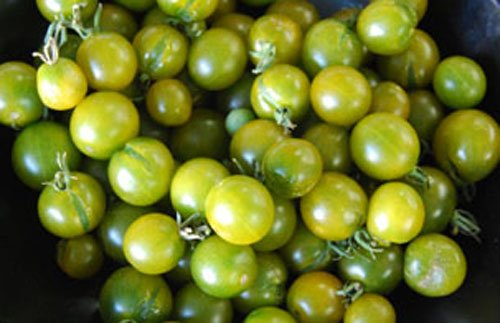 HEIRLOOM NON GMO Green Grape Tomato 25 - Chartreuse Salad
