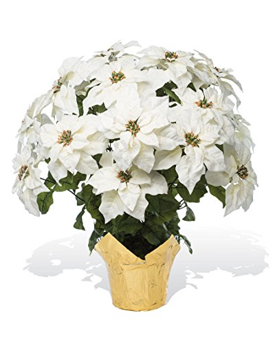 PETALS - Extra Large Premier Silk Poinsettia - Handcrafted - Amazingly Lifelike - 34 x 26 Inches (White) (Poinsettia Prices)