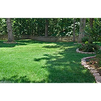 Fescue grass seed blend, Combat Extreme, For Southern Zone - USDA Zones 8 - 10(1 LB ( Zones 8 - 10)) : Garden & Outdoor