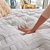 Sealy 14-Inch Plush Euro Pillow Top, Queen, Made in