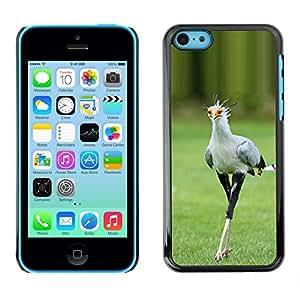 FlareStar Colour Printing Bird Green Spring Roadrunner Nature cáscara Funda Case Caso de plástico para Apple iPhone 5C