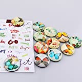 12 Pack Butterfly Pattern Fridge Magnets