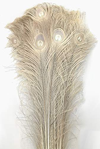 Peacock Tail Feathers - American Feathers Eyed Peacock Tail Feathers 30-35