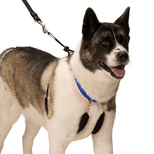 SPORN Dog Halter, Blue, X-Large