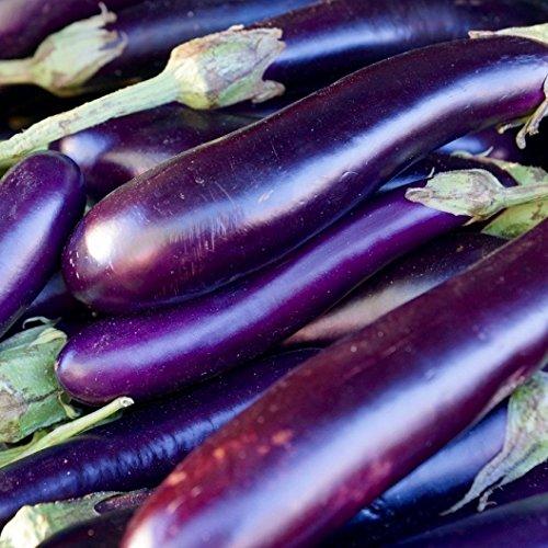 David's Garden Seeds Eggplant Long Purple SL1131 (Purple) 50 Non-GMO, Heirloom Seeds