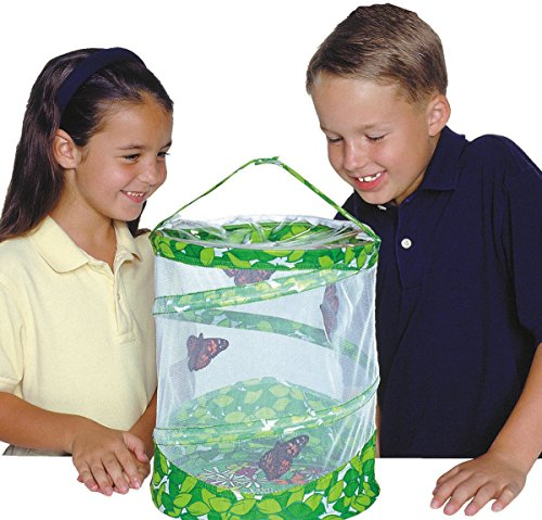 Live Butterfly Caterpillars (Insect Lore Butterfly Growing Kit Toy - Includes Voucher Coupon for 5 Live Caterpillars to Butterflies)