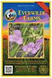 Everwilde Farms - 200 Prairie Spiderwort Native Wildflower Seeds - Gold Vault Jumbo Seed Packet