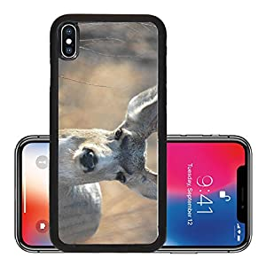 Liili Premium Apple iPhone X Aluminum Backplate Bumper Snap Case A mule deer buck making direct eye contact with the camera lens Photo 2406220