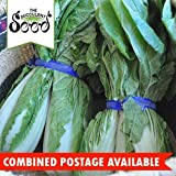 Portal Cool Korean Cabbage - Green Seoul (400 Seeds) Great For Kimchee Pei