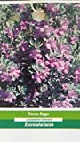 1 gal. TEXAS SAGE Shrub Live Flowering Purple Home Landscape Plants Garden Bush