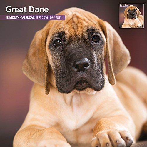 Magnet & Steel 2017 Great Dane Calendar, Traditional Wall Calendar