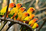 CHOIS Custom Films CF3334 Animal Parrots Birds Glass Window Frosted DIY Stickers 4' W by 3' H