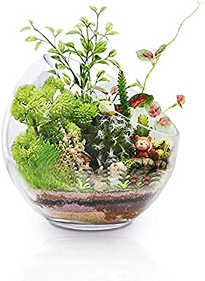 Ecosides Large Glass Fish Bowl 7 X7 Glass Planter Terrarium Air Plant Holder Glass Vase For Tabletop Decoration Amazon Sg Home