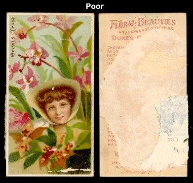 (1892 Duke N75 Floral Beauties (Non-Sports) Card# 36 orchid Fair Condition)
