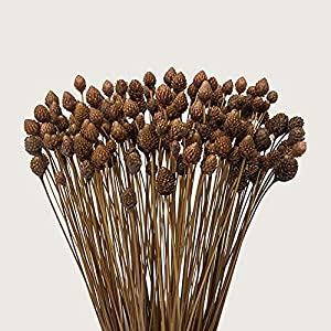 """90 Stems Dry Flowers Brazilian Import Small Pine Cone Dried Small Flowers Decorative Mini Dry Bouquet for Wedding Floral Arrangements, 12"""" -16"""" Tall Home Decorations 102"""