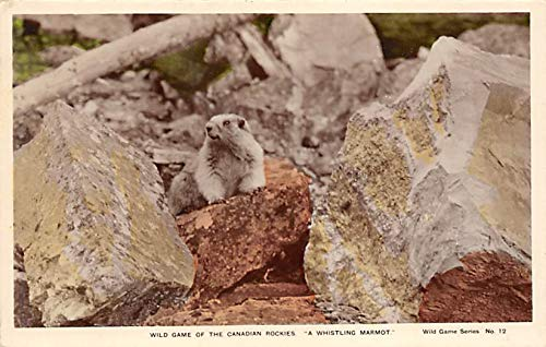 Squirrel/Chipmunks/Woodchucks Wild Game of the Canadian Rockies Canada 1943 Missing Stamp