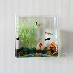 KAZE HOME Wall Mount Square Fish Bowl