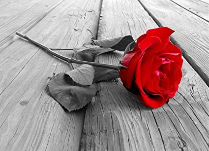 Wall mural red rose black white photo wallpaper 254x183cm nature wall art