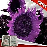 100Pcs Sunflower Seeds Plant Garden Planting Field Decor with 2Pcs Fertilizer - Sunflower Seeds