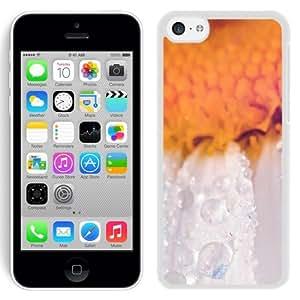 Unique Designed Cover Case For iPhone 5C With Mn Flower Raindrop Orange Nature (2) Phone Case Kimberly Kurzendoerfer