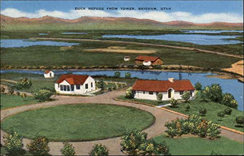 Duck Refuge From Tower Brigham City, Utah Original Vintage ()