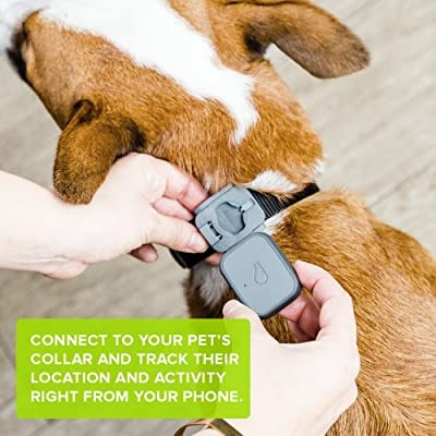 Dog Tracker & Activity Monitor