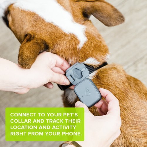 Whistle 3 GPS Pet Tracker & Activity Monitor – The Best GPS Dog Tracker for Long Battery Life