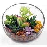 Asymmetrical Glass Terrarium - Indoor Succulent Garden (Plants Included)