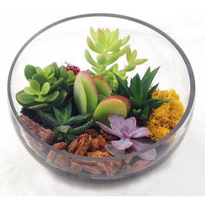 Asymmetrical Glass Terrarium - Indoor Succulent Garden (Plants Included) by Envelor Home