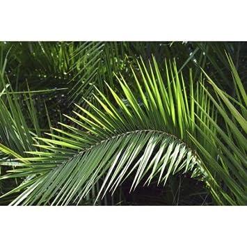 Suave Toalla de Playa con Estampado Digital de Palmeras de la Marca Agla-Home, 100% poliéster, Blanco, 31.5 X 51.2 Inch: Amazon.es: Hogar