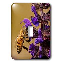 Danita Delimont - Insects - USA, Colorado, Jefferson County. Honey bee on salvia blossoms. - Light Switch Covers - single toggle switch (lsp_230407_1)