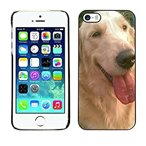 - Golden Retriever Dog - - Monedero pared Design Premium cuero del tir¨®n magn¨¦tico delgado del caso de la cubierta pata de ca FOR Apple iPhone 5 5S Funny House