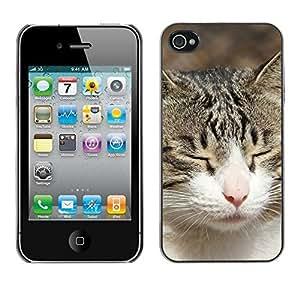 Design Hard ShellAmerican Shorthair British House Cat For Samsung Galaxy S5 Mini Case Cover