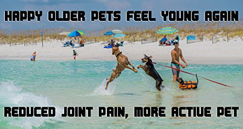 All-Natural-Joint-Hip-Supplement-for-Dogs-Cats-Glucosamine-Chondroitin-MSM-Caco3-with-74-Minerals-Kona-Berry-Pain-Relief-For-Your-Pets-Joints-and-Hips-Made-At-USA-FDA-Inspected-Facility
