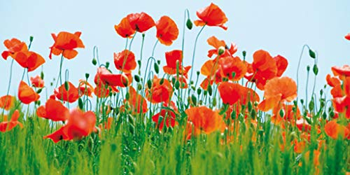 - Wizard Jan Lens Poppy Fields Thick Cardstock Poster 39x19.5 inch